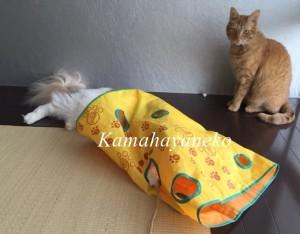 カシャカシャ猫6