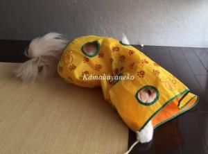 カシャカシャ猫8
