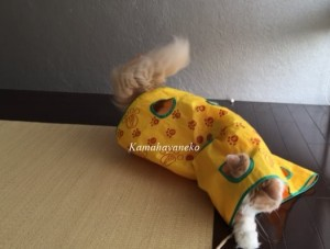 カシャカシャ猫9