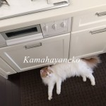 キッチン猫3