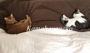 一緒に寝る猫1