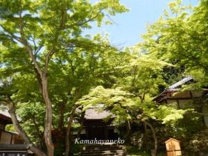 円覚寺11