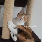 猫タワー3