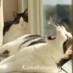 猫出窓14