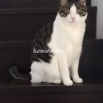 階段猫ハル4