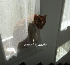カーテン猫2