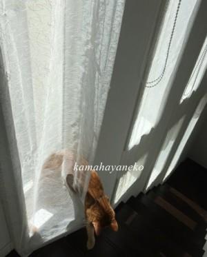 カーテン猫4
