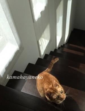 カーテン猫7
