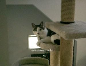 モニター猫