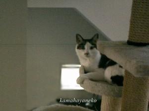モニター猫2