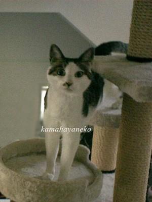 モニター猫3