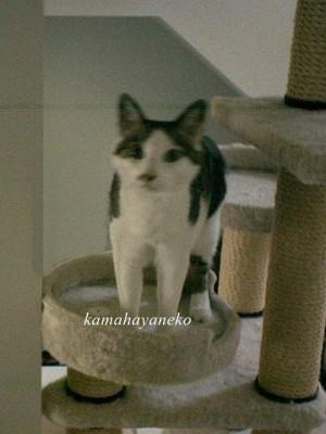 モニター猫4