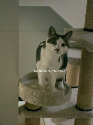 モニター猫5
