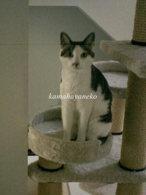 モニター猫6