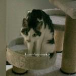 モニター猫7