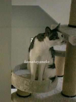 モニター猫8