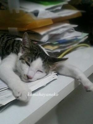 子猫こうめスリー2