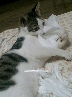 子猫こうめスリー4