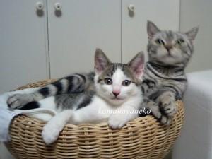 子猫こうめツー3