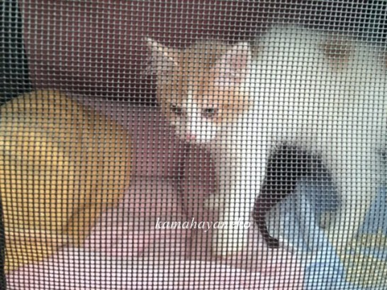 子猫みさきスリー1