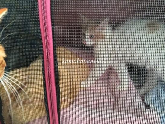 子猫みさきスリー2