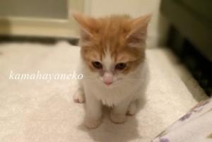 子猫みさきツー1