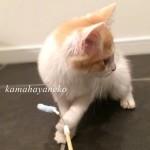 子猫みさきツー8