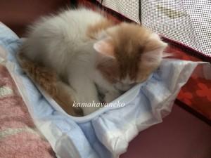 子猫みさき1