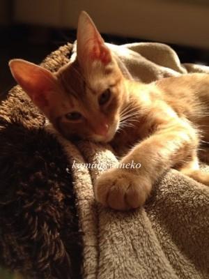 子猫グブスリー1