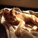 子猫グブスリー2