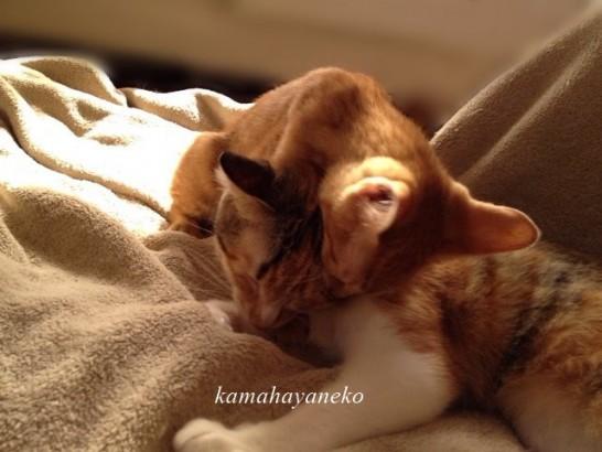 子猫グブスリー5