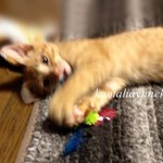 子猫グブツー3