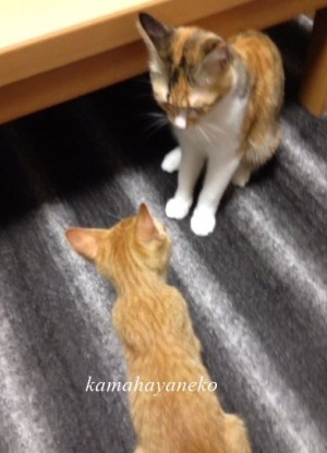 子猫グブツー5