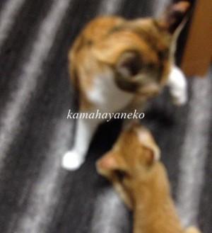 子猫グブツー5.5