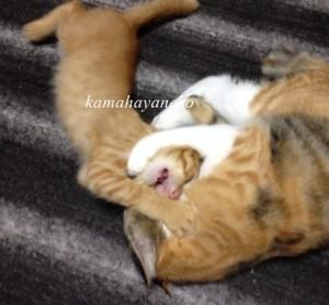 子猫グブツー6