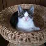 子猫ハルツー3