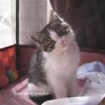 子猫ハル3