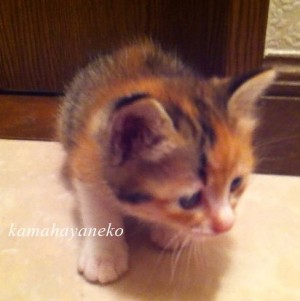 子猫メイ2