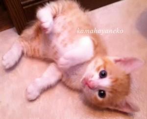 子猫メイ2.5