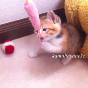 子猫メイ3