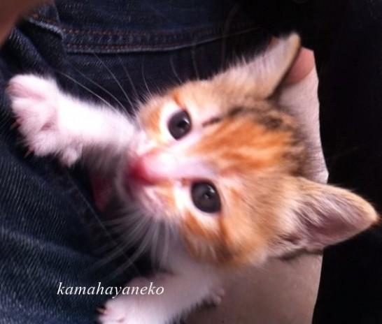 子猫メイ4