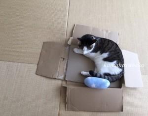 モフモフ枕3
