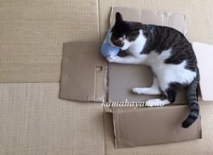 モフモフ枕4