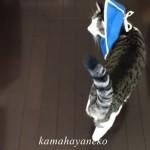 猫カラー2