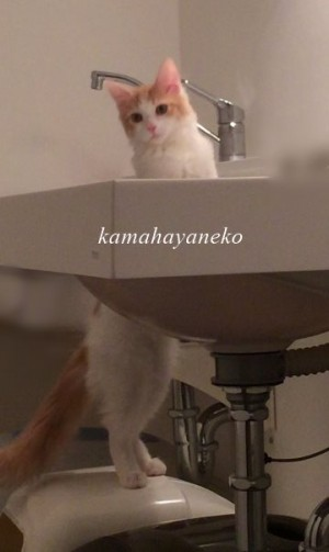 猫トイレ4