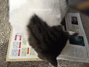 読書じゃま猫2