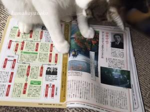 読書じゃま猫4