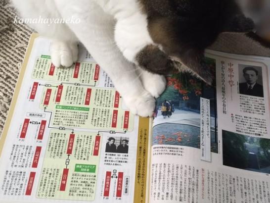 読書じゃま猫5