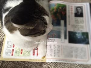 読書じゃま猫6