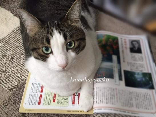 読書じゃま猫7